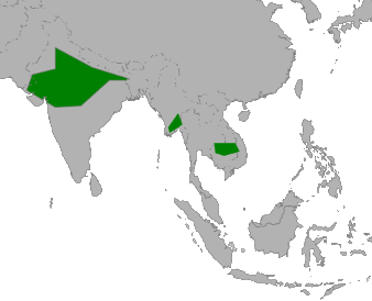Sarus Crane distribution in Asia