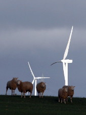 Sheep and wind turbines, SW Victoria